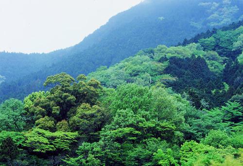 矢倉岳麓の新緑(69版)