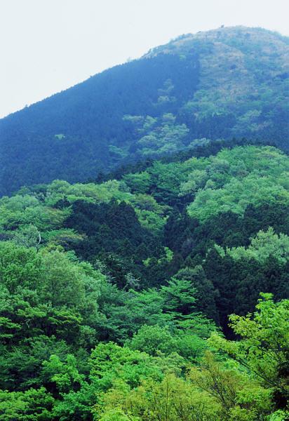 矢倉岳麓の新緑(69版縦位置)